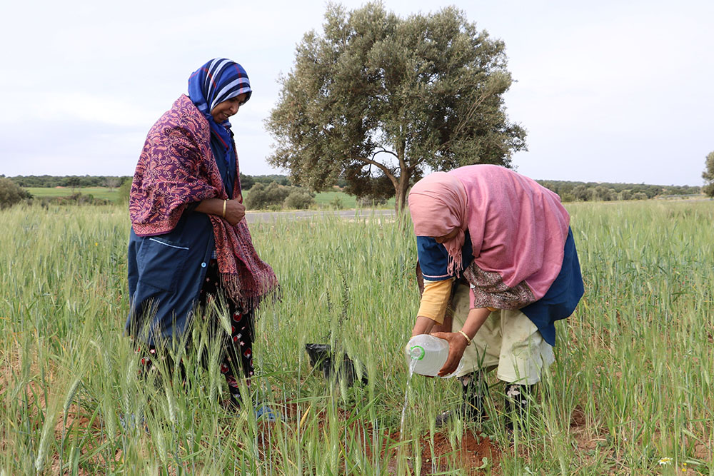 HAF to Plant Trees in Morocco on Martin Luther King Day