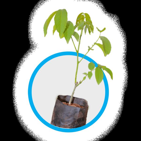plant 2 HAf Morocco