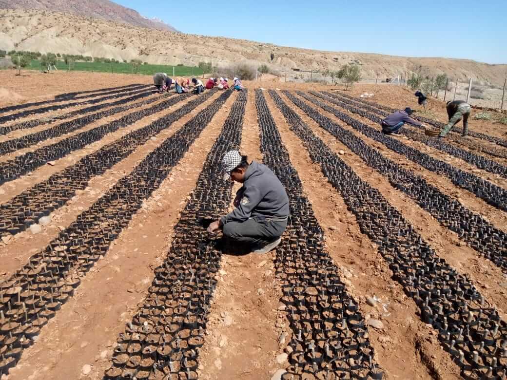 Making the Farmer King: Why Fair Trade Is a Big Deal